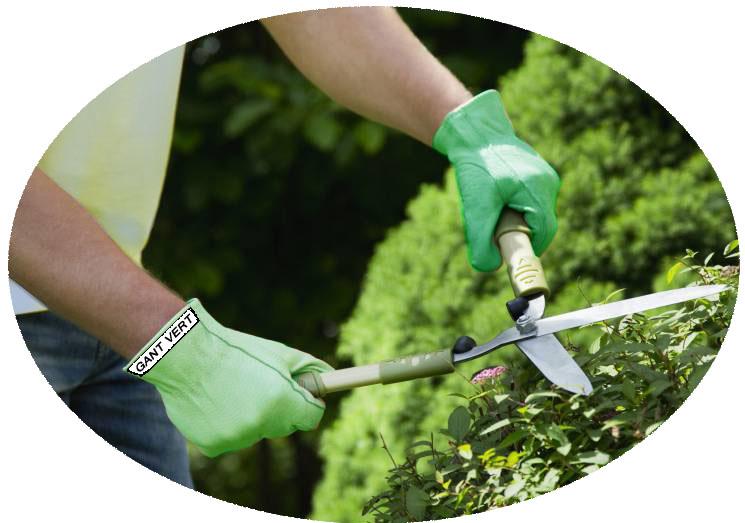 Haie gants verts copie