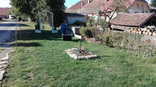 Plantation un pommier avec pierre de taille